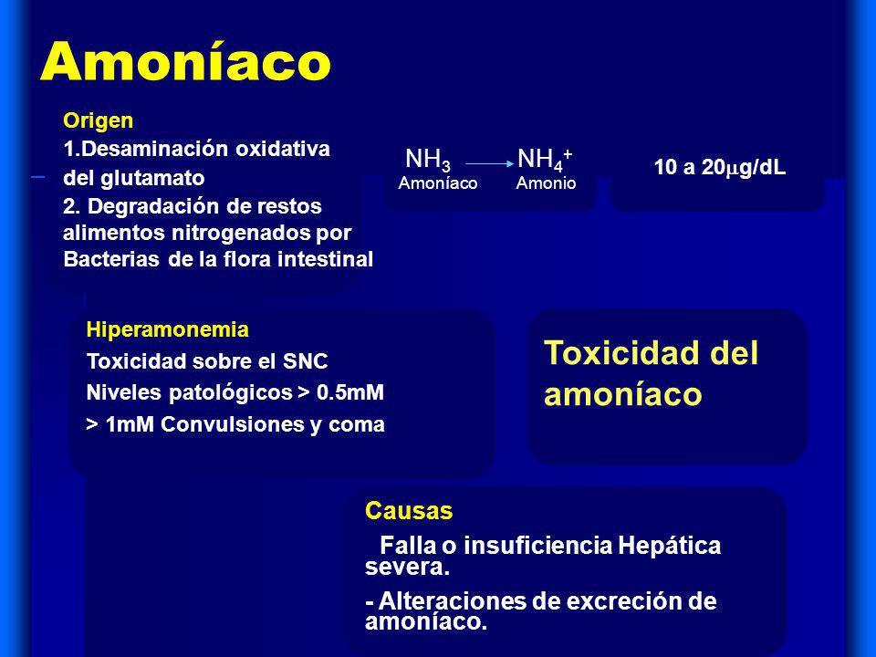 Amoníaco Toxicidad del amoníaco NH3 NH4+ Causas