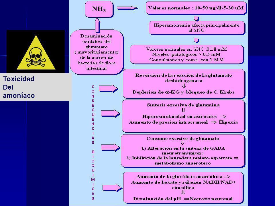 Toxicidad Del amoníaco