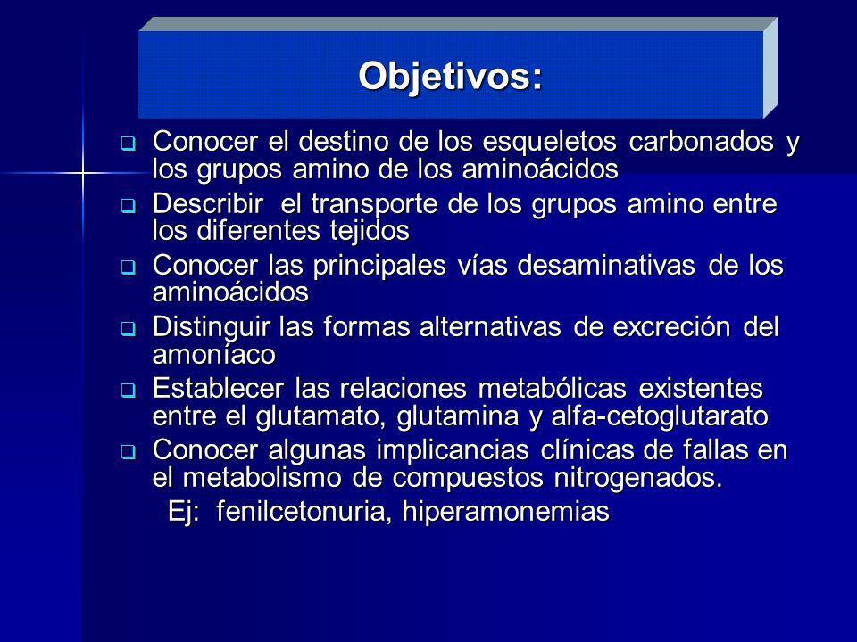 Objetivos:Conocer el destino de los esqueletos carbonados y los grupos amino de los aminoácidos.