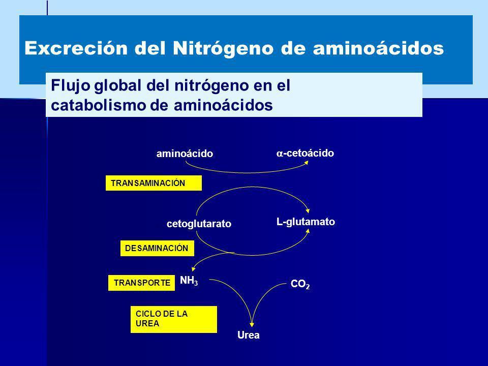 Excreción del Nitrógeno de aminoácidos