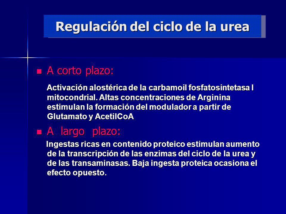 Regulación del ciclo de la urea