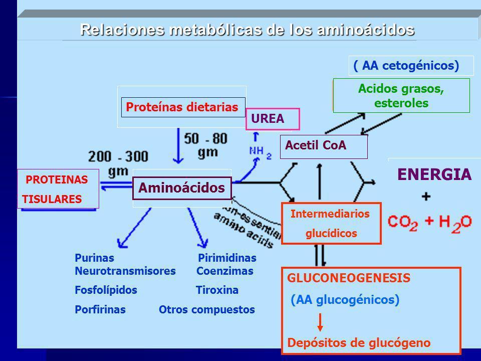 Relaciones metabólicas de los aminoácidos Acidos grasos, esteroles