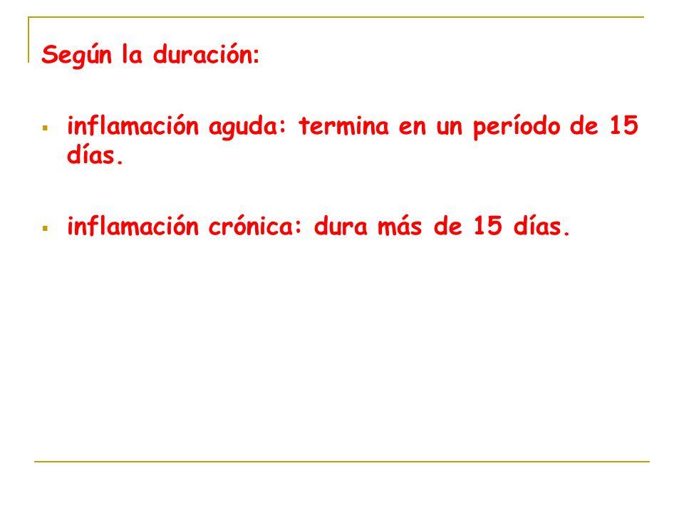 Según la duración: inflamación aguda: termina en un período de 15 días.