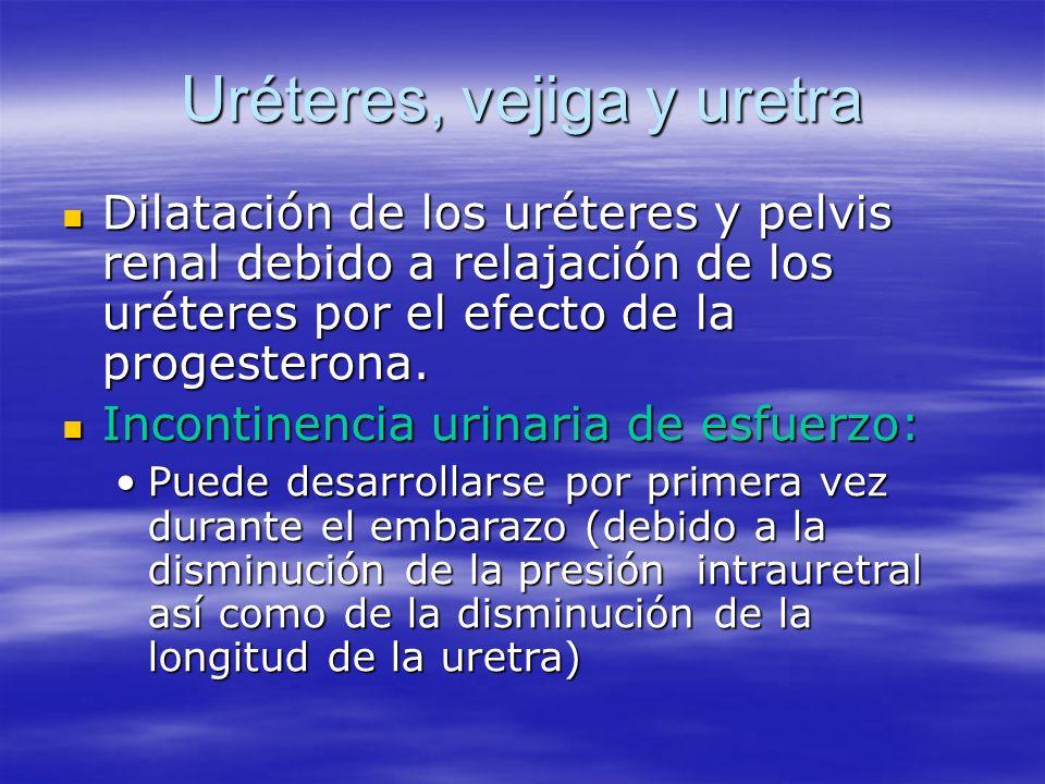 Uréteres, vejiga y uretra