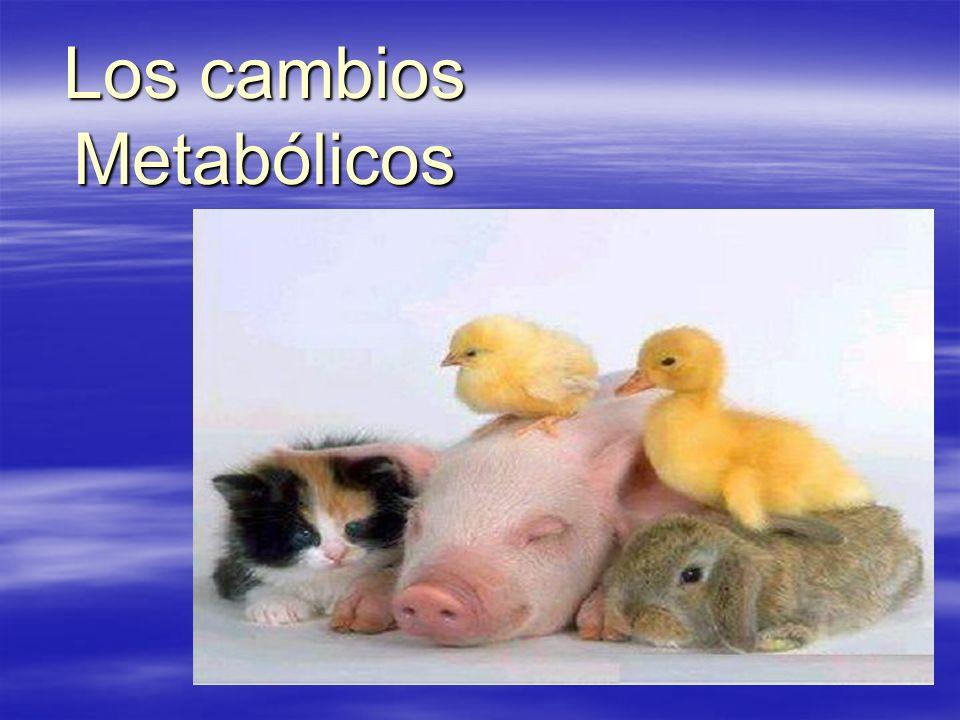 Los cambios Metabólicos