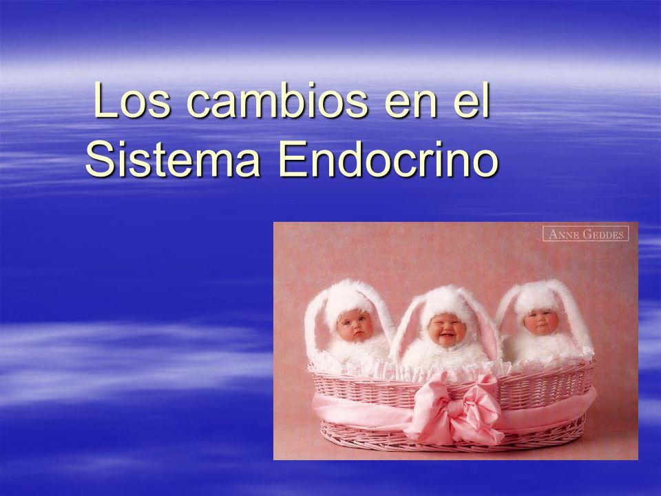 Los cambios en el Sistema Endocrino