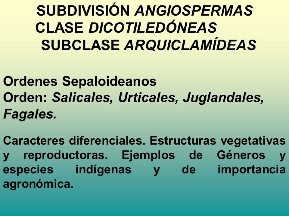 SUBDIVISIÓN ANGIOSPERMAS SUBCLASE ARQUICLAMÍDEAS