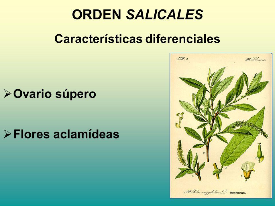 Características diferenciales