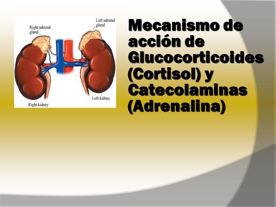 Mecanismo de acción de Glucocorticoides (Cortisol) y Catecolaminas (Adrenalina)