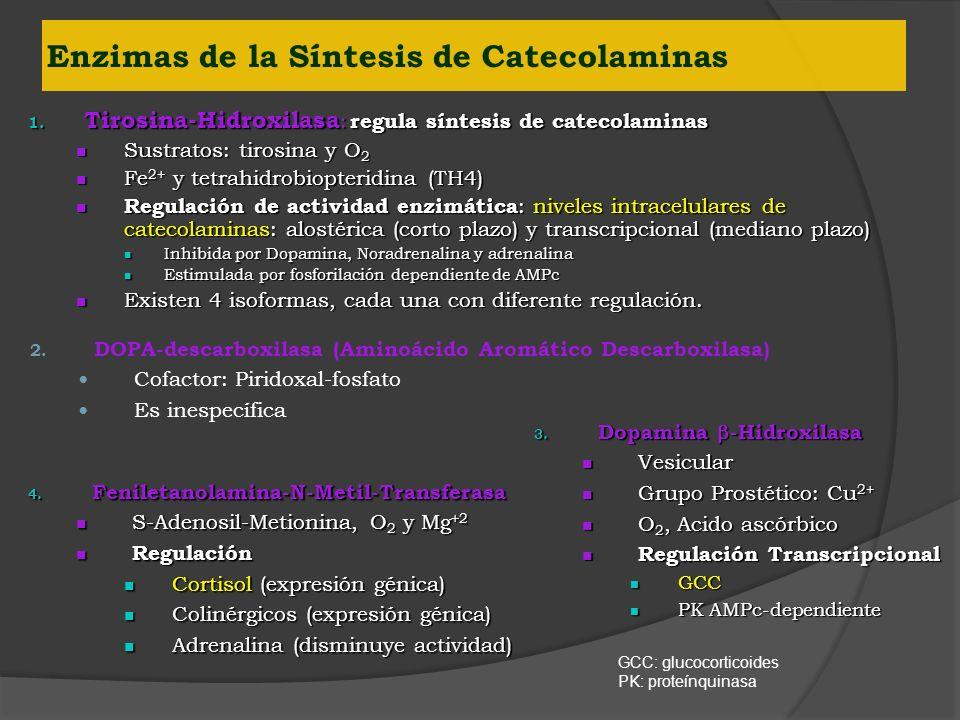 Enzimas de la Síntesis de Catecolaminas
