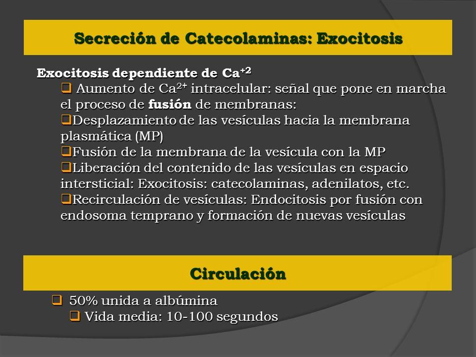 Secreción de Catecolaminas: Exocitosis