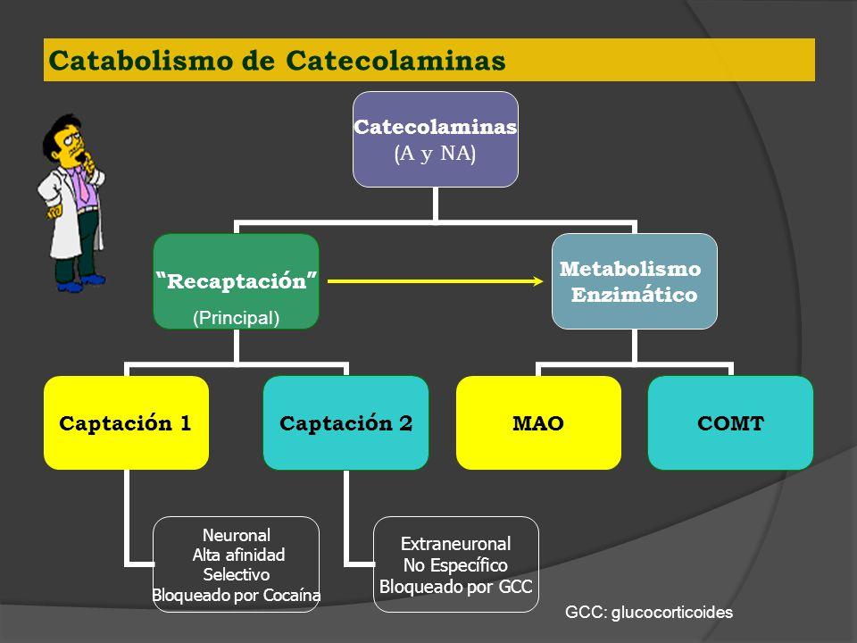 Catabolismo de Catecolaminas