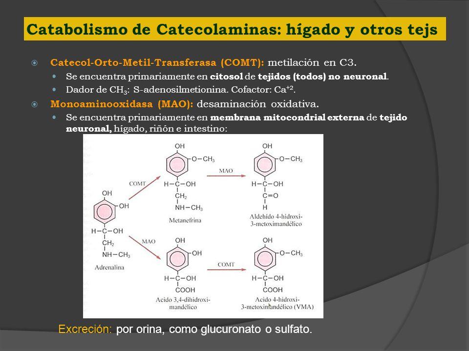 Catabolismo de Catecolaminas: hígado y otros tejs