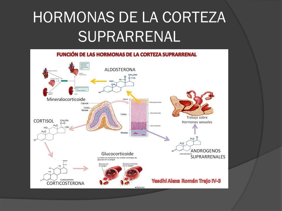 HORMONAS DE LA CORTEZA SUPRARRENAL