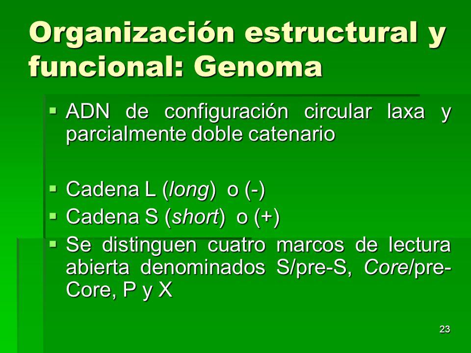 Organización estructural y funcional: Genoma
