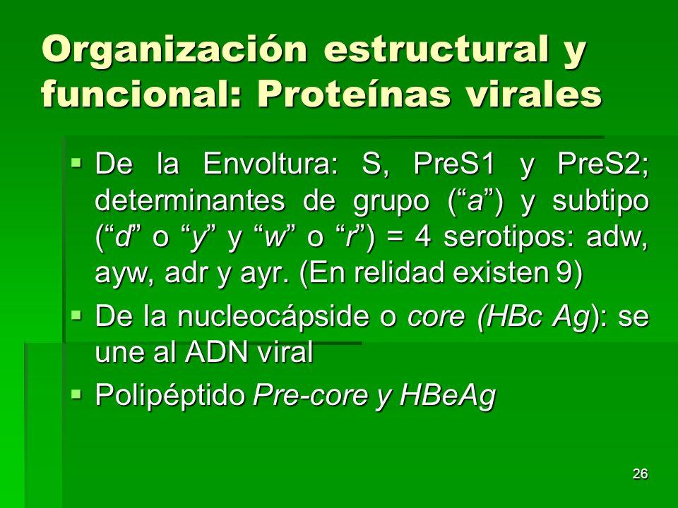 Organización estructural y funcional: Proteínas virales