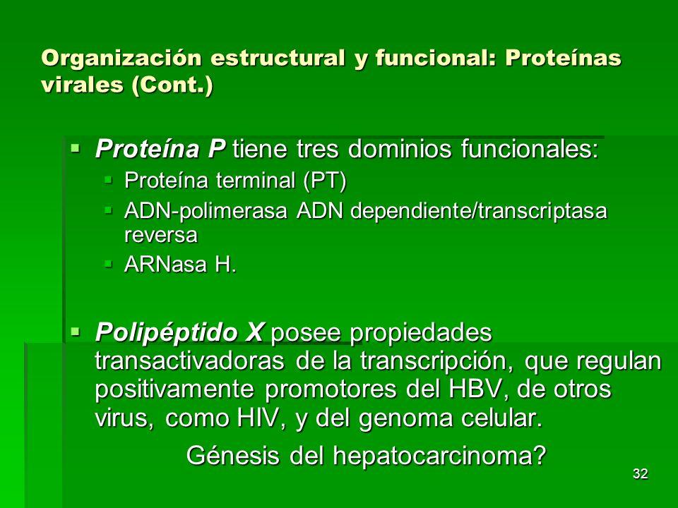 Organización estructural y funcional: Proteínas virales (Cont.)