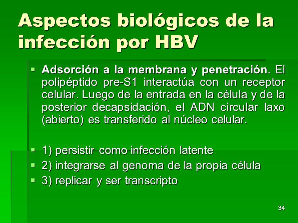 Aspectos biológicos de la infección por HBV
