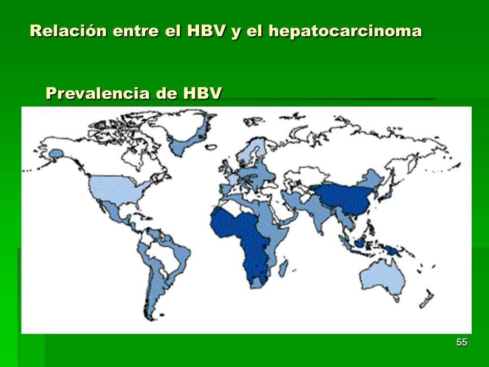 Relación entre el HBV y el hepatocarcinoma