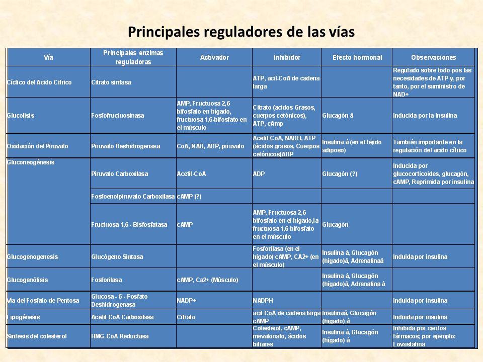 Principales reguladores de las vías