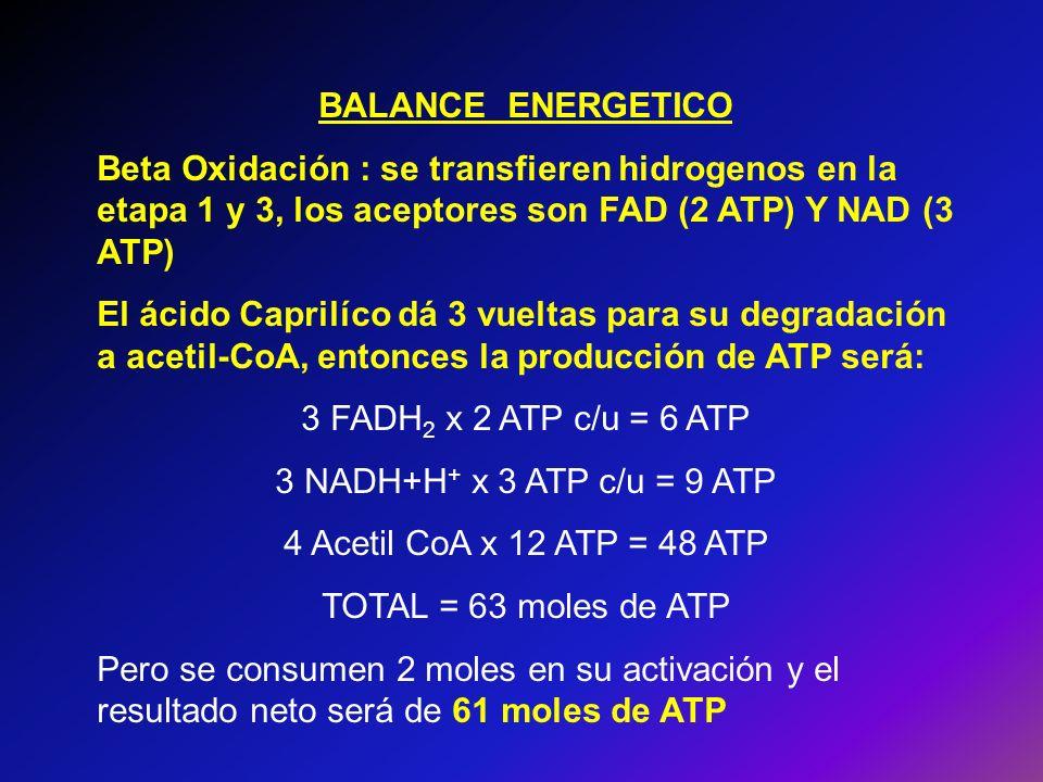 BALANCE ENERGETICO Beta Oxidación : se transfieren hidrogenos en la etapa 1 y 3, los aceptores son FAD (2 ATP) Y NAD (3 ATP)