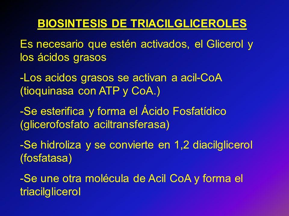 BIOSINTESIS DE TRIACILGLICEROLES