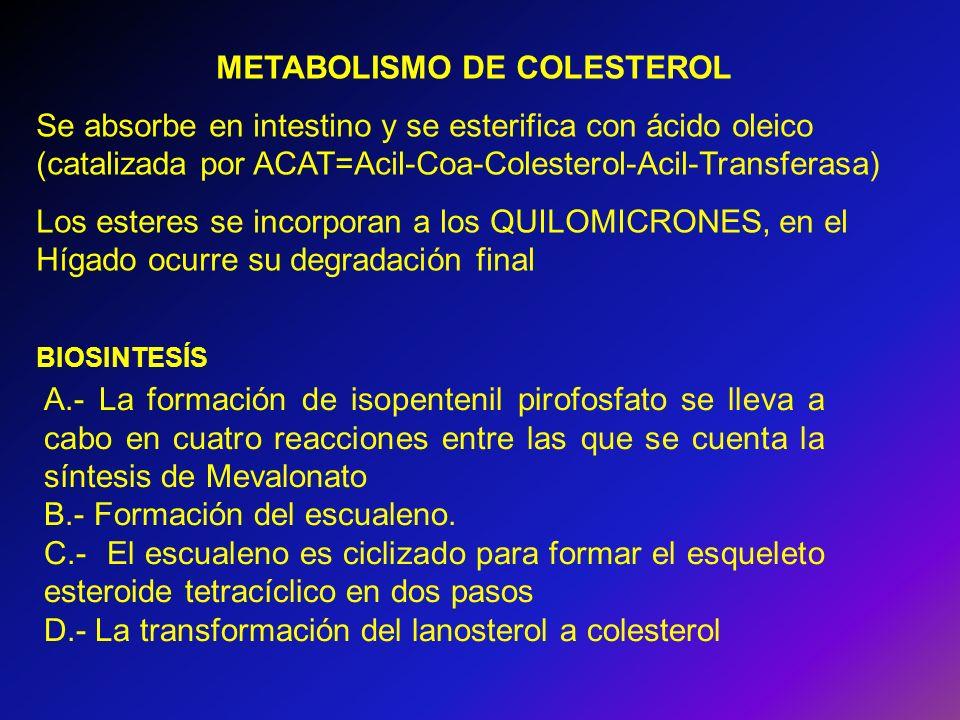 METABOLISMO DE COLESTEROL