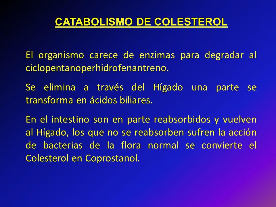 CATABOLISMO DE COLESTEROL