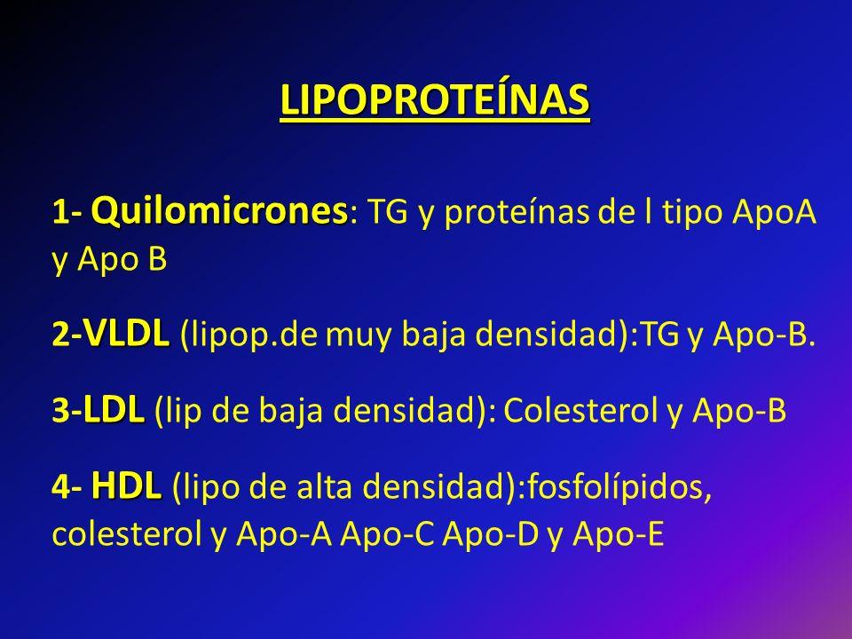 LIPOPROTEÍNAS 1- Quilomicrones: TG y proteínas de l tipo ApoA y Apo B