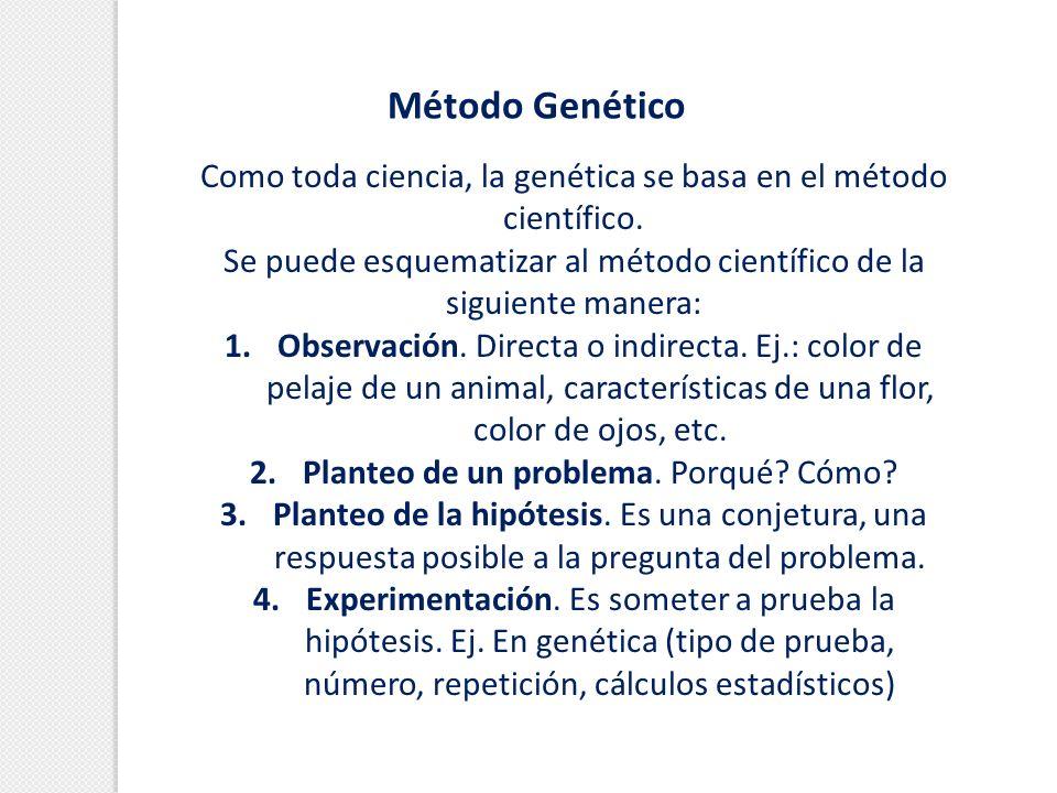 Método GenéticoComo toda ciencia, la genética se basa en el método científico. Se puede esquematizar al método científico de la siguiente manera:
