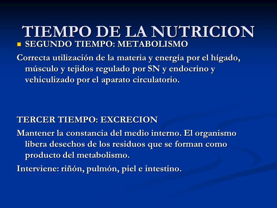 TIEMPO DE LA NUTRICION SEGUNDO TIEMPO: METABOLISMO