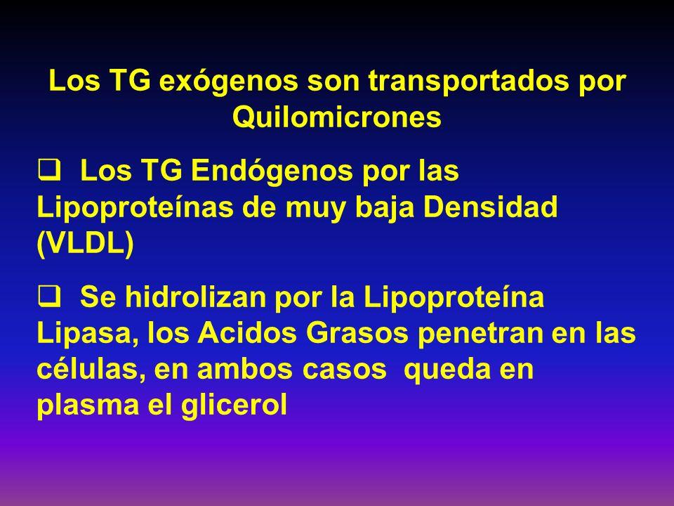Los TG exógenos son transportados por Quilomicrones