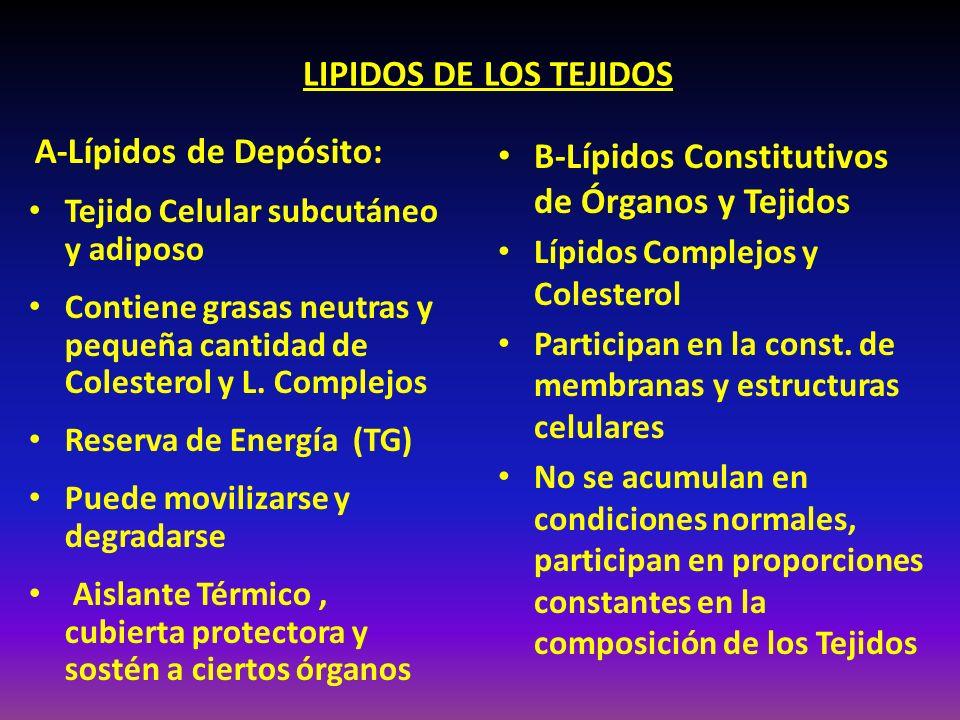 B-Lípidos Constitutivos de Órganos y Tejidos