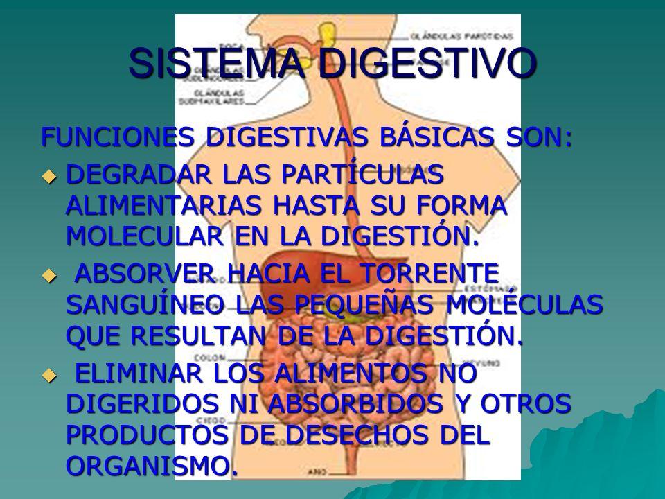 SISTEMA DIGESTIVO FUNCIONES DIGESTIVAS BÁSICAS SON: