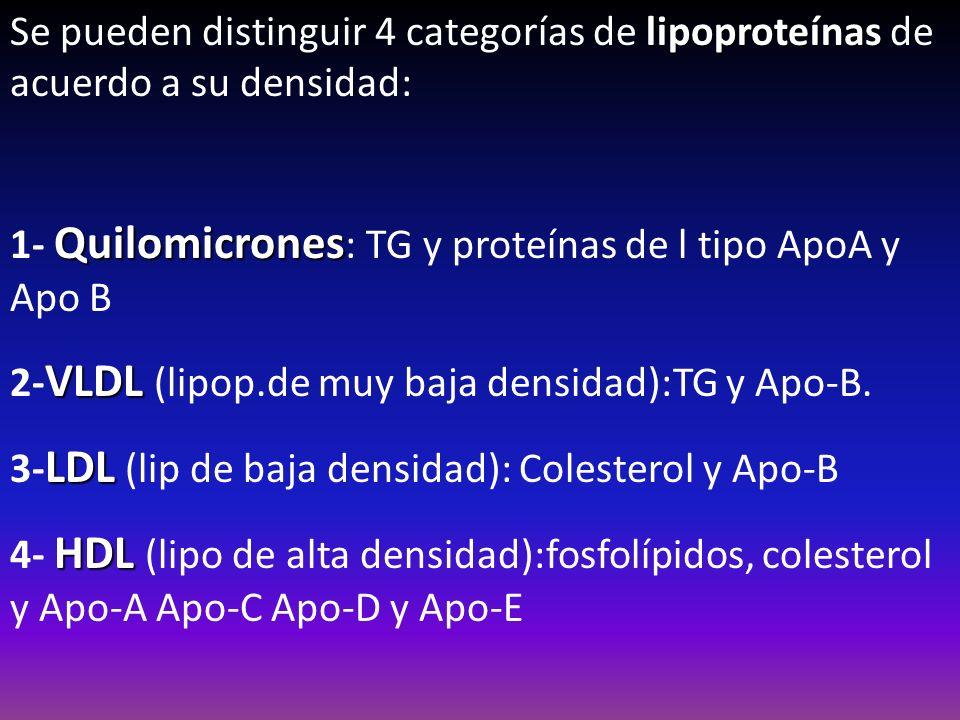 Se pueden distinguir 4 categorías de lipoproteínas de acuerdo a su densidad: