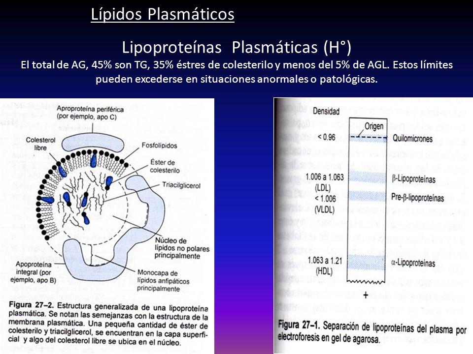 Lipoproteínas Plasmáticas (H°)