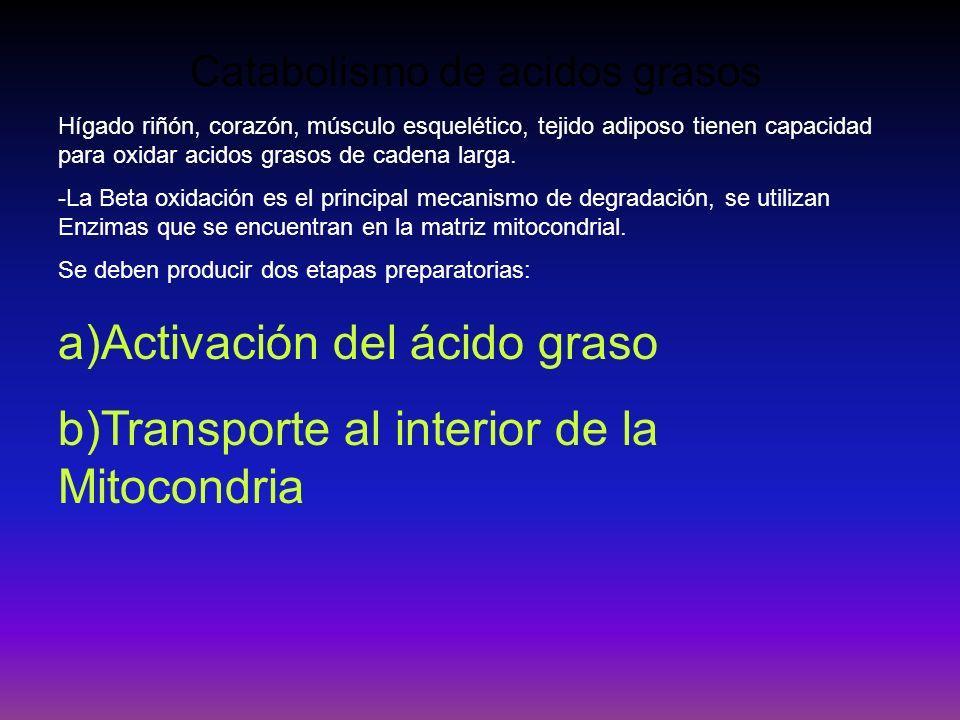 Catabolismo de acidos grasos