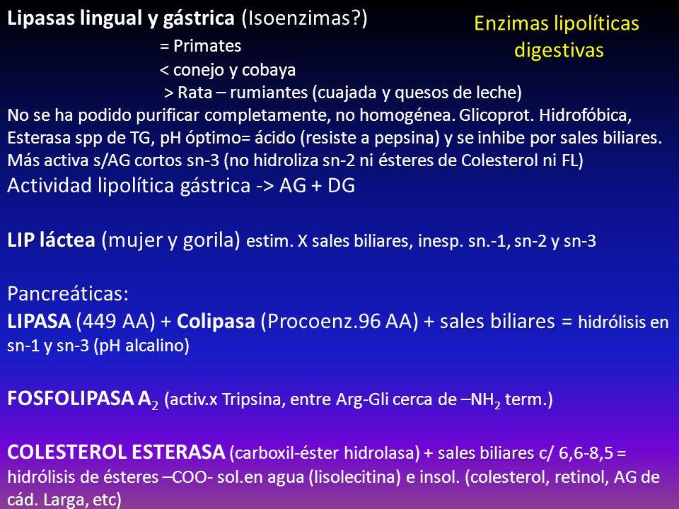 Lipasas lingual y gástrica (Isoenzimas ) = Primates