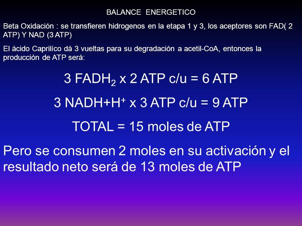3 FADH2 x 2 ATP c/u = 6 ATP 3 NADH+H+ x 3 ATP c/u = 9 ATP