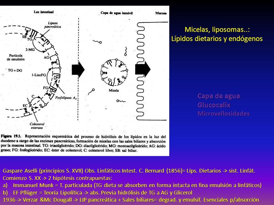 Lípidos dietarios y endógenos