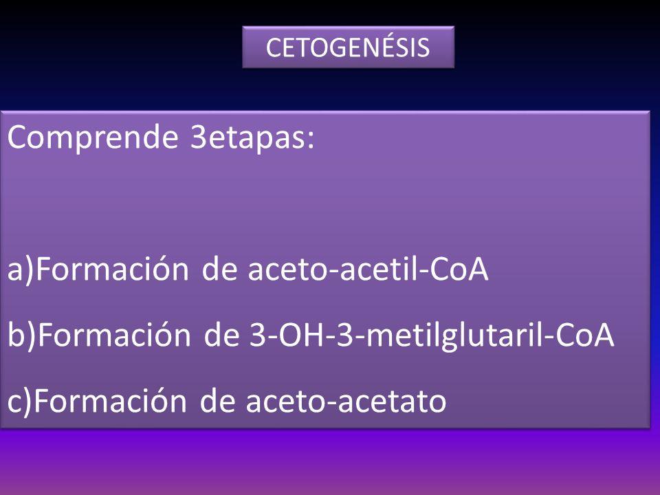 a)Formación de aceto-acetil-CoA