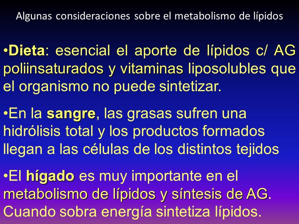 Algunas consideraciones sobre el metabolismo de lípidos