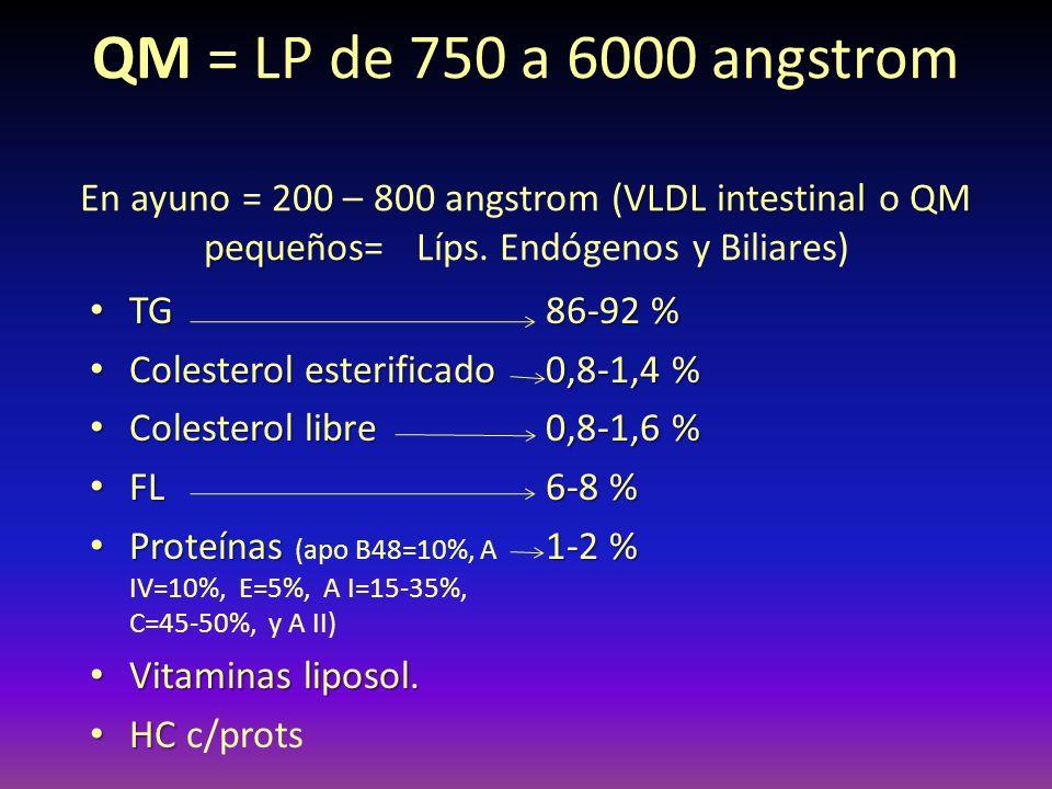 QM = LP de 750 a 6000 angstrom En ayuno = 200 – 800 angstrom (VLDL intestinal o QM pequeños= Líps. Endógenos y Biliares)