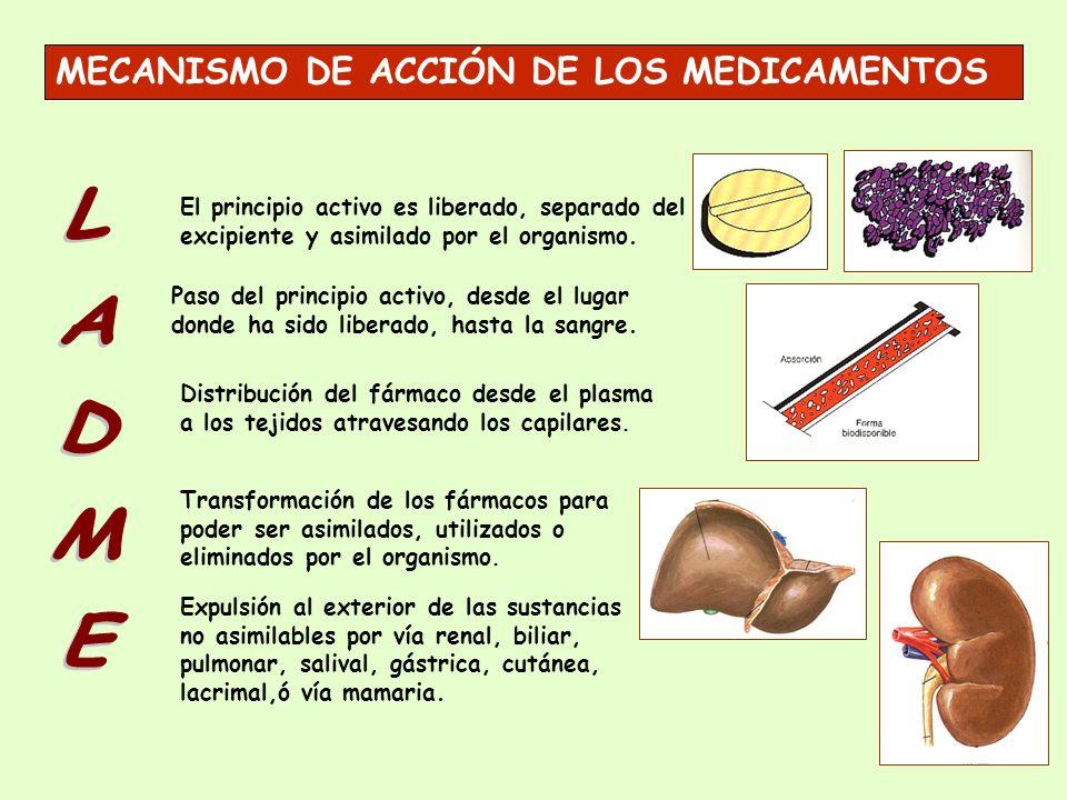 LADME MECANISMO DE ACCIÓN DE LOS MEDICAMENTOS