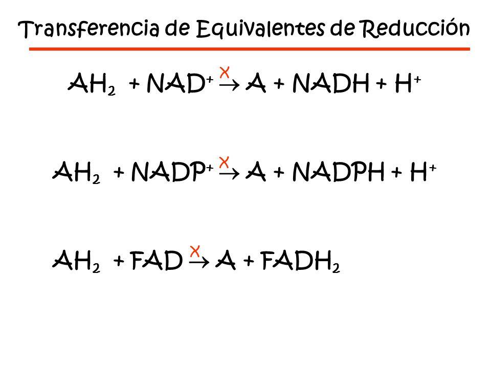 AH2 + NAD+  A + NADH + H+ AH2 + NADP+  A + NADPH + H+