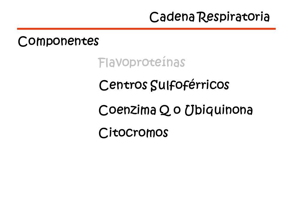Cadena Respiratoria Componentes. Flavoproteínas. Centros Sulfoférricos. Coenzima Q o Ubiquinona.