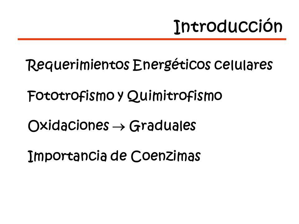 Introducción Requerimientos Energéticos celulares
