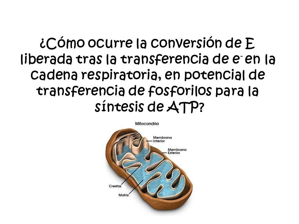 ¿Cómo ocurre la conversión de E