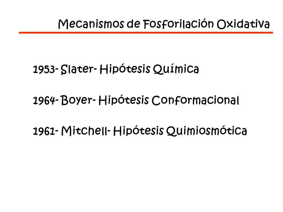 Mecanismos de Fosforilación Oxidativa