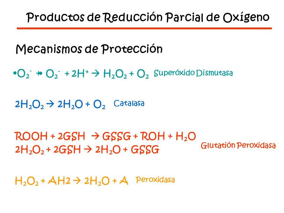 Productos de Reducción Parcial de Oxígeno